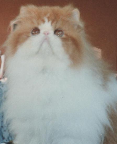 amandari-goa-ancien-chaton.jpg