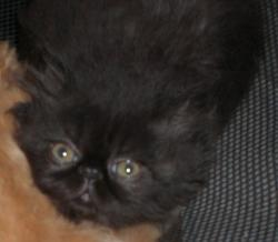 hyppy-black-boy-10-2012.jpg