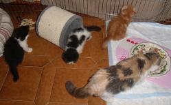 Trois bebes et maman 21 07 2014